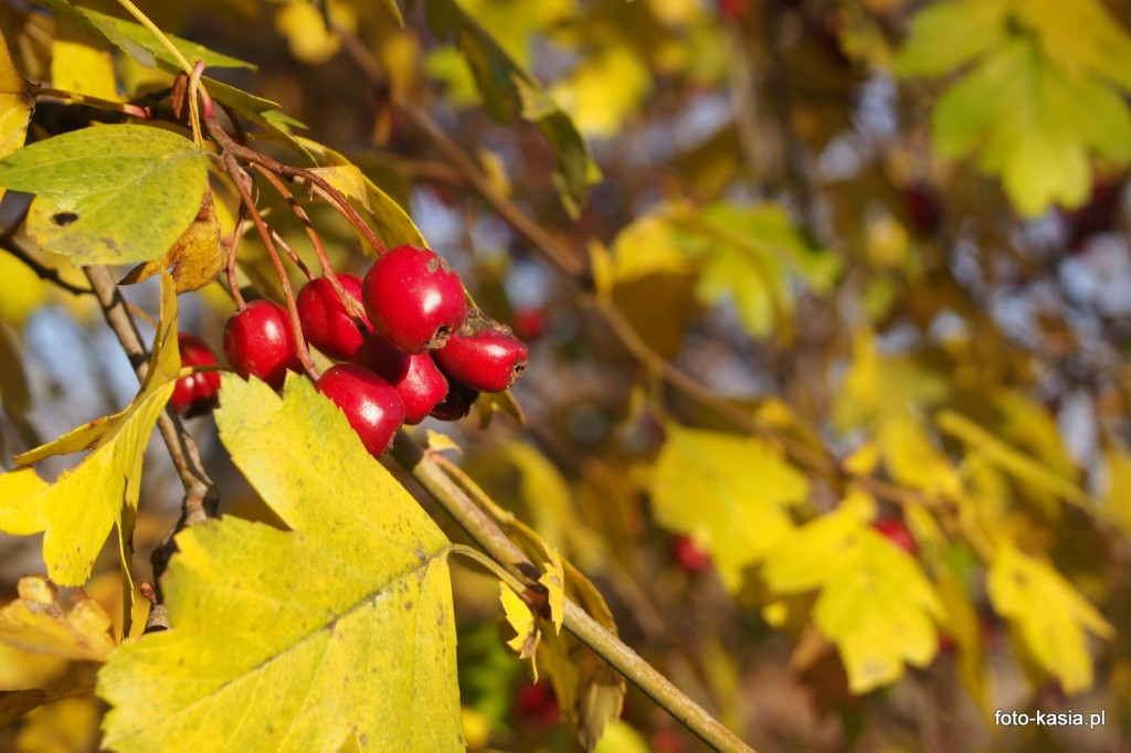 Złota polska jesień, w końcu przyszła.